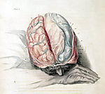 Brain in thought