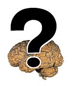 Question mark brain