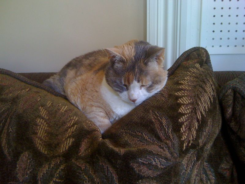Lydia on back sofa