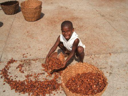 Boy collecting cacao