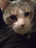 Lydia closeup