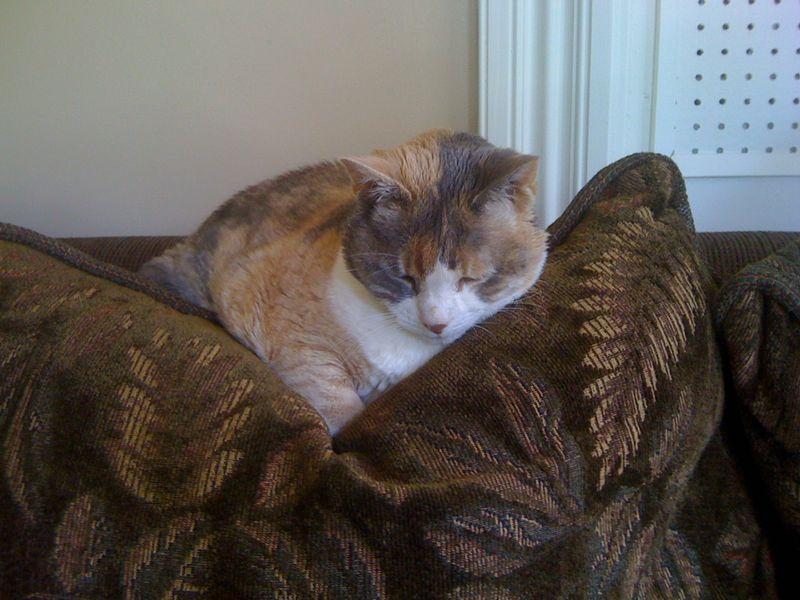 Lydia on back of sofa