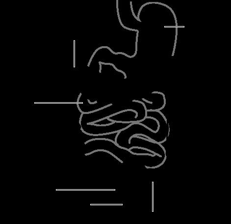 Intestine-diagram.svg