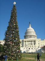 US_Capitol_Christmas_tree_2008
