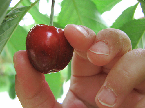 Cherry_picking