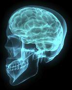 Brain_1