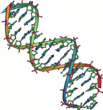 DNA_double_helix
