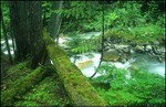 Old_growth_forest_2
