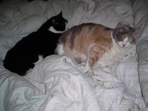 Cats_1_2