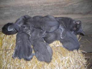 Kitten_mosh_pit