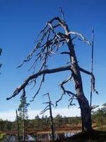 6_dead_tree