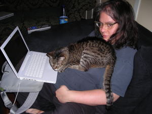Catfish_blogging