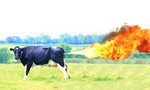 Cow_fart_5